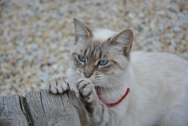 Meilleur griffoir pour chat