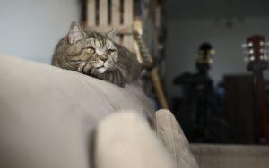 meilleur griffoir canapé chat