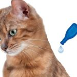 anti puces pour chat