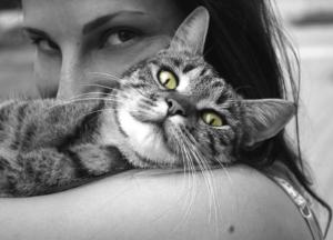 Meilleur antistress pour chat