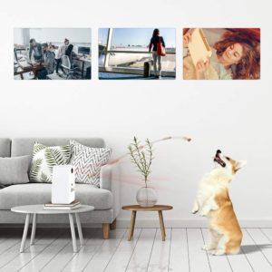 Puppy Kitty Camera